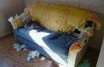 Dog on chewed couch